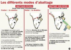 7744945346_les-differents-modes-d-abattage